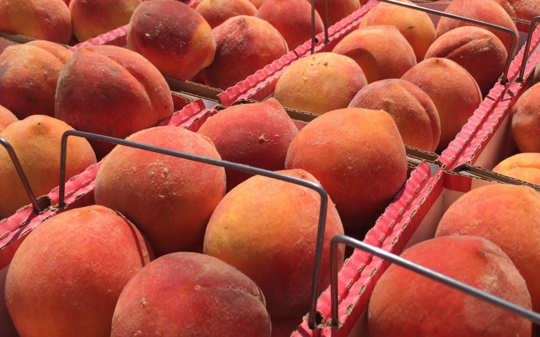 Peach fest 2021