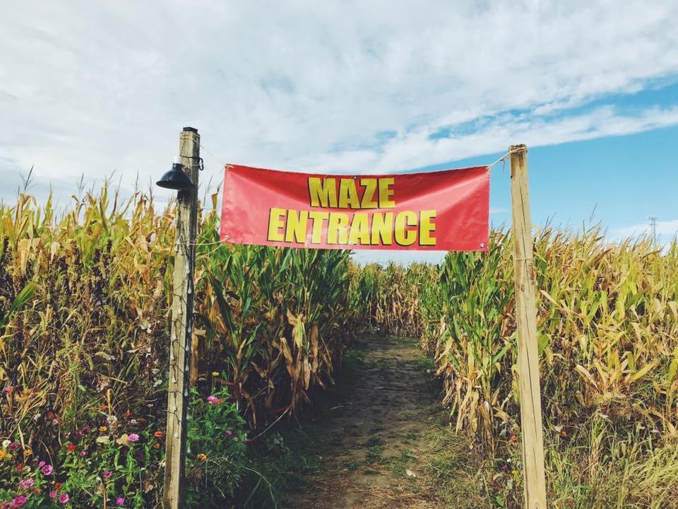 Corn Maze Lynd Fruit Farm