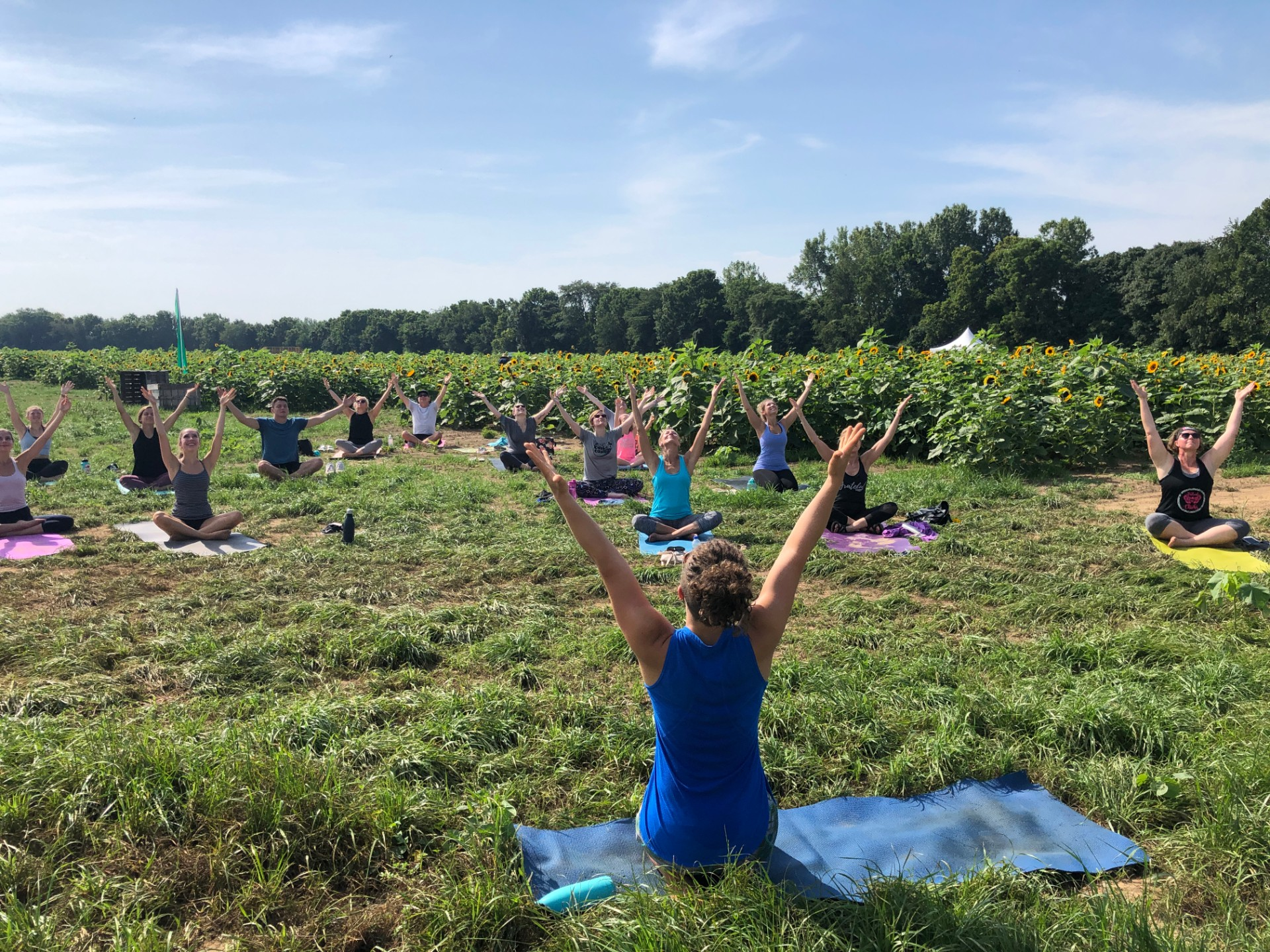 Yoga in the Sunflowers at Lynd's